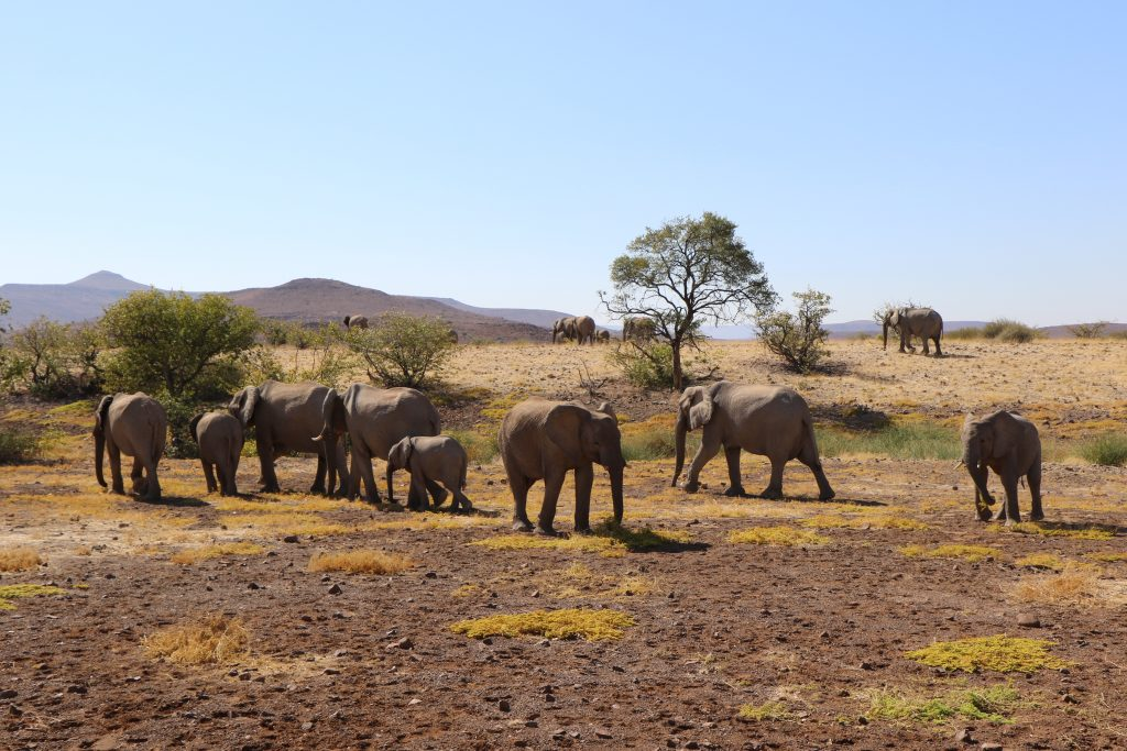 Namibie D98A0708