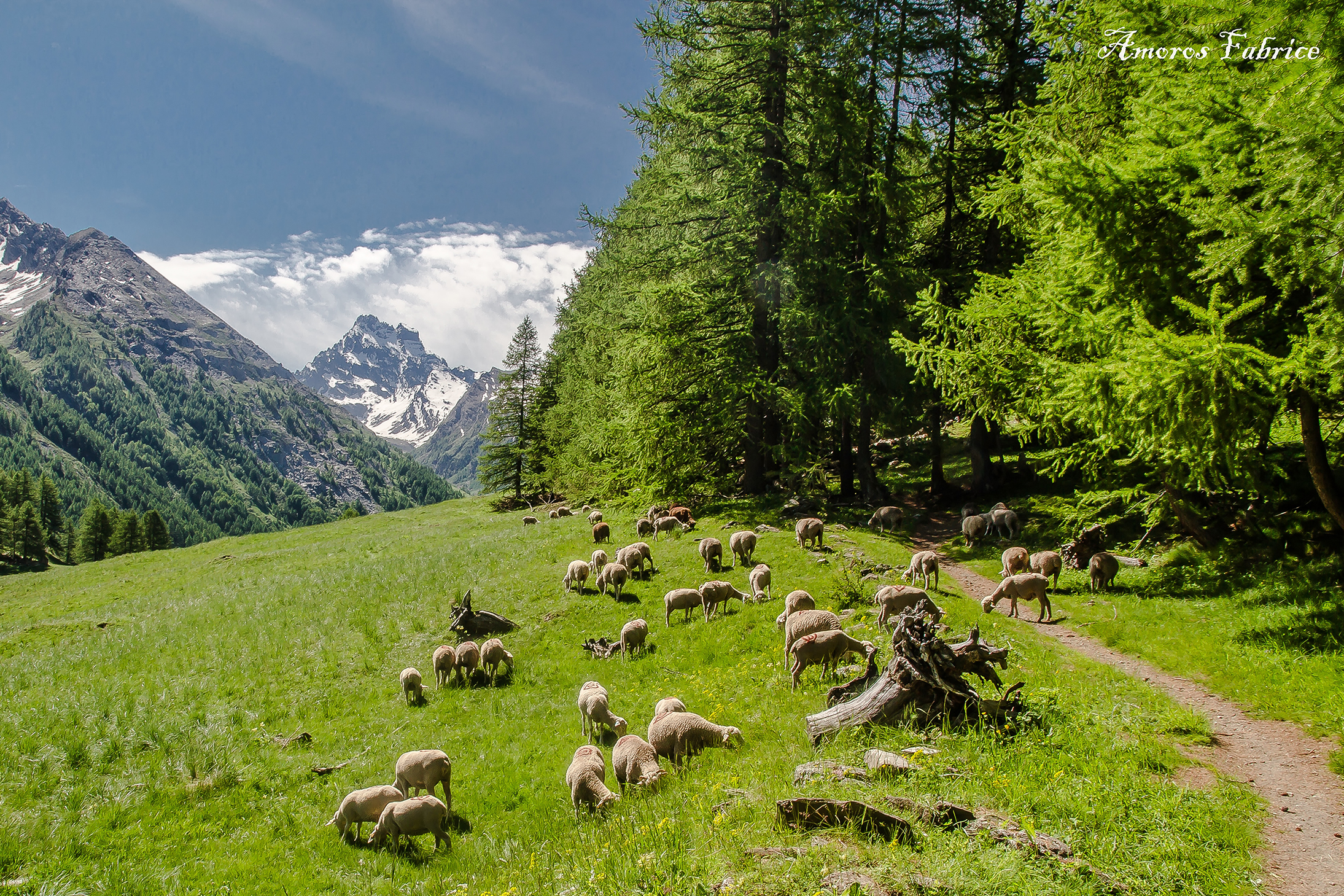Queyras-Mont-Viso-+-moutons-©Fabrice-Amoros