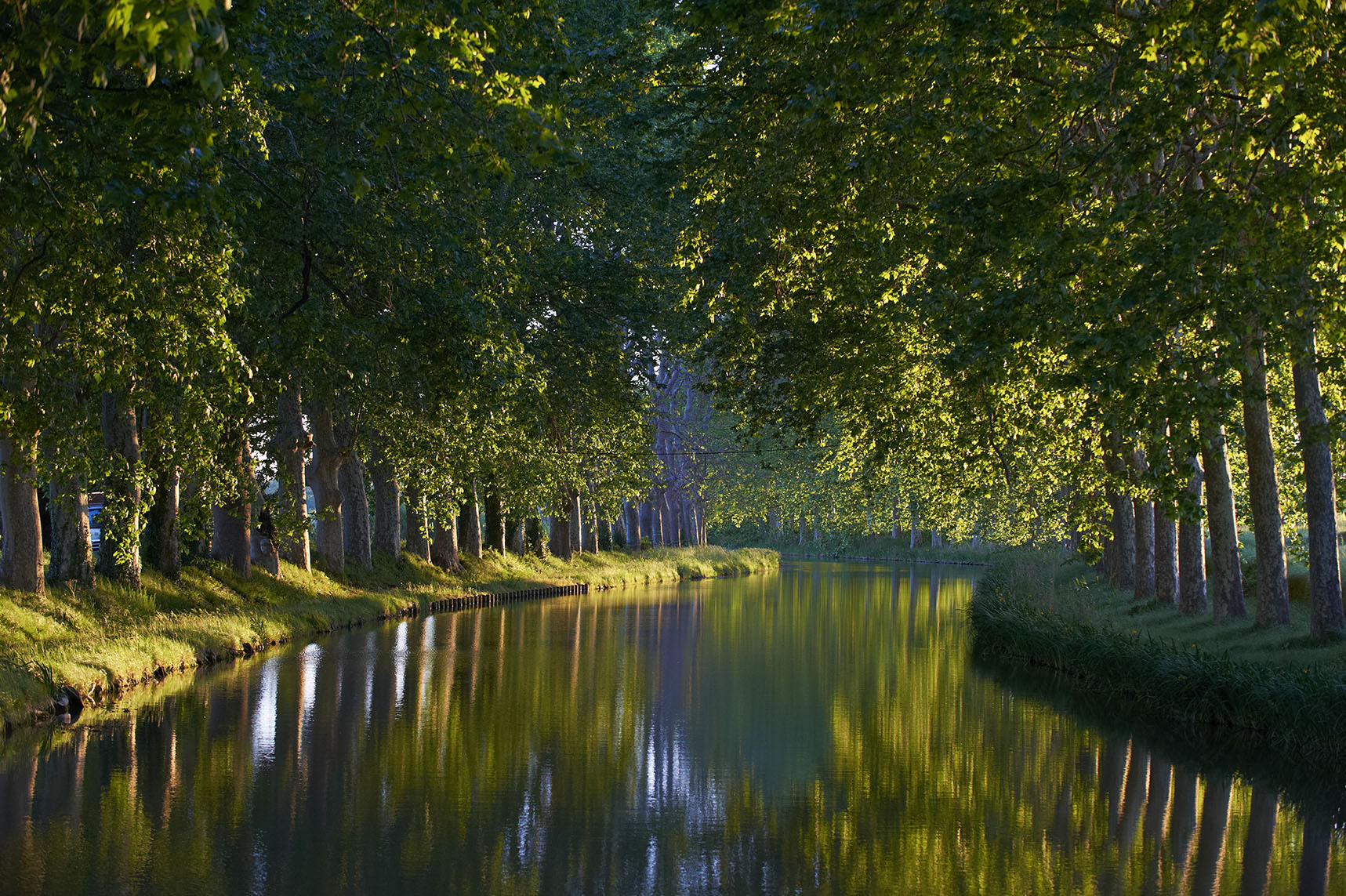 France, Languedoc-Roussillon, Aude (11), Canal du Midi, tree lined canal