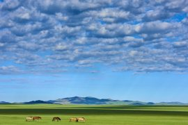 Mongolia, horse herd in the steppe