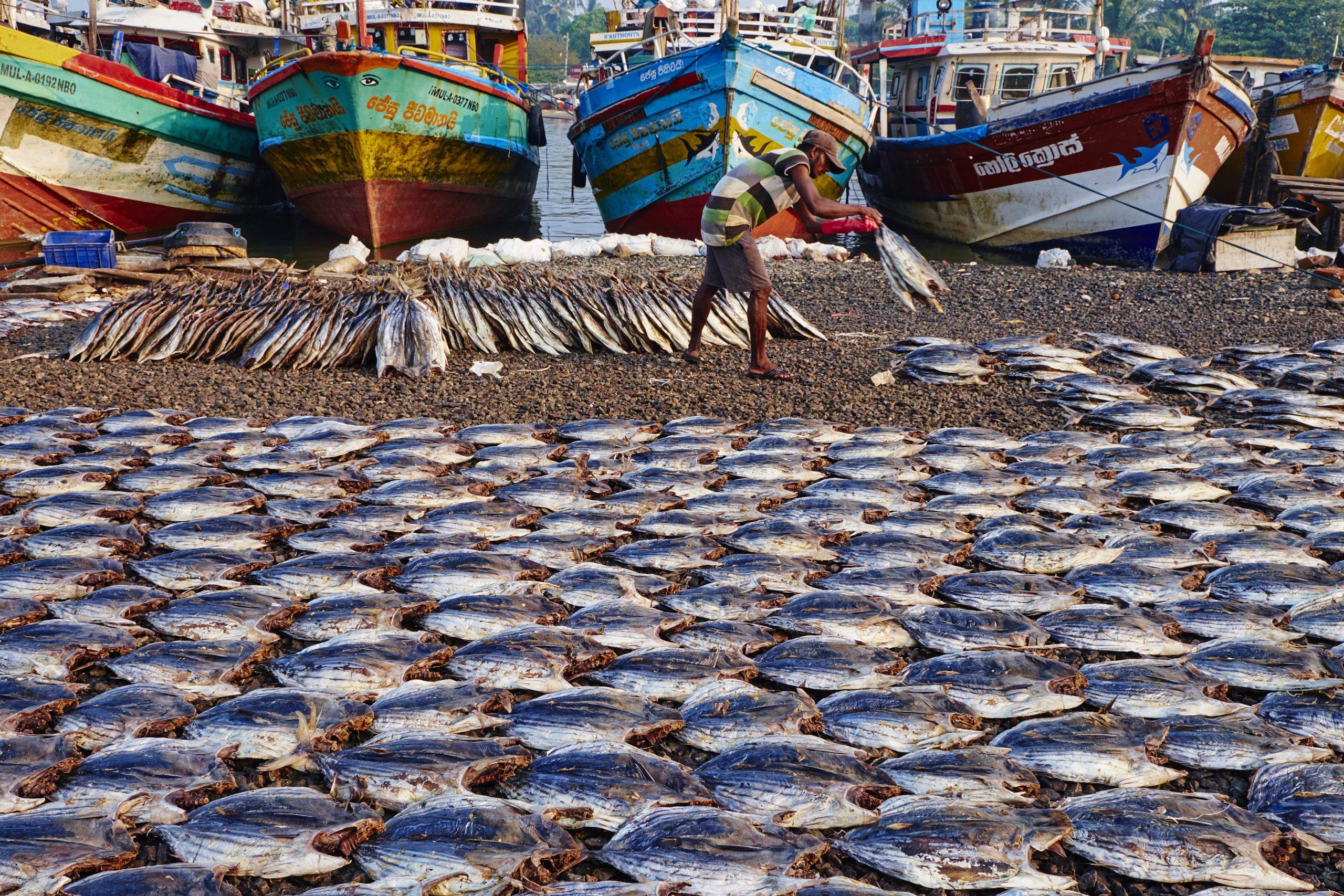 Sri Lanka, Negombo, fishermen's village
