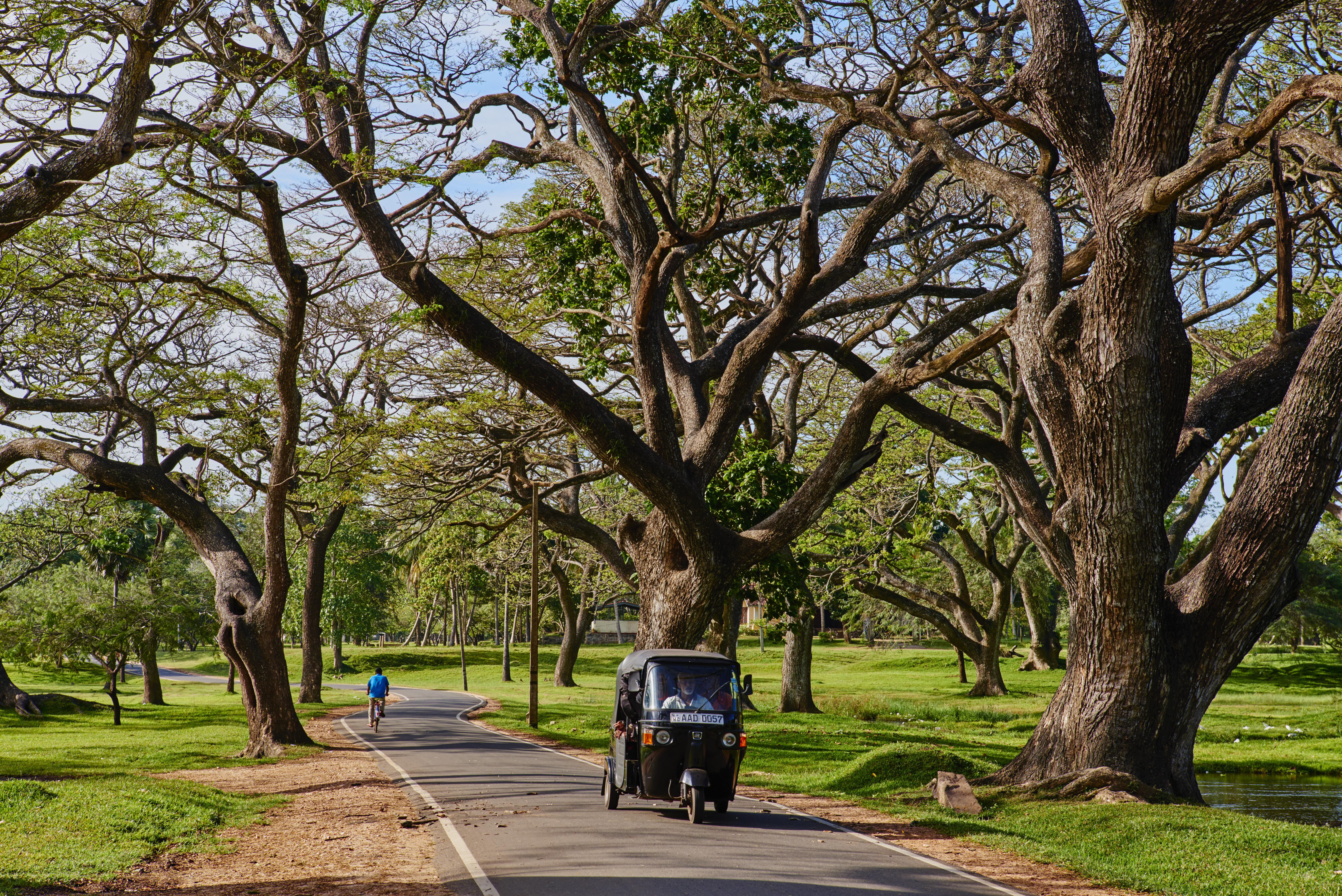 Sri Lanka, Anuradhapura, rickshaw under tree
