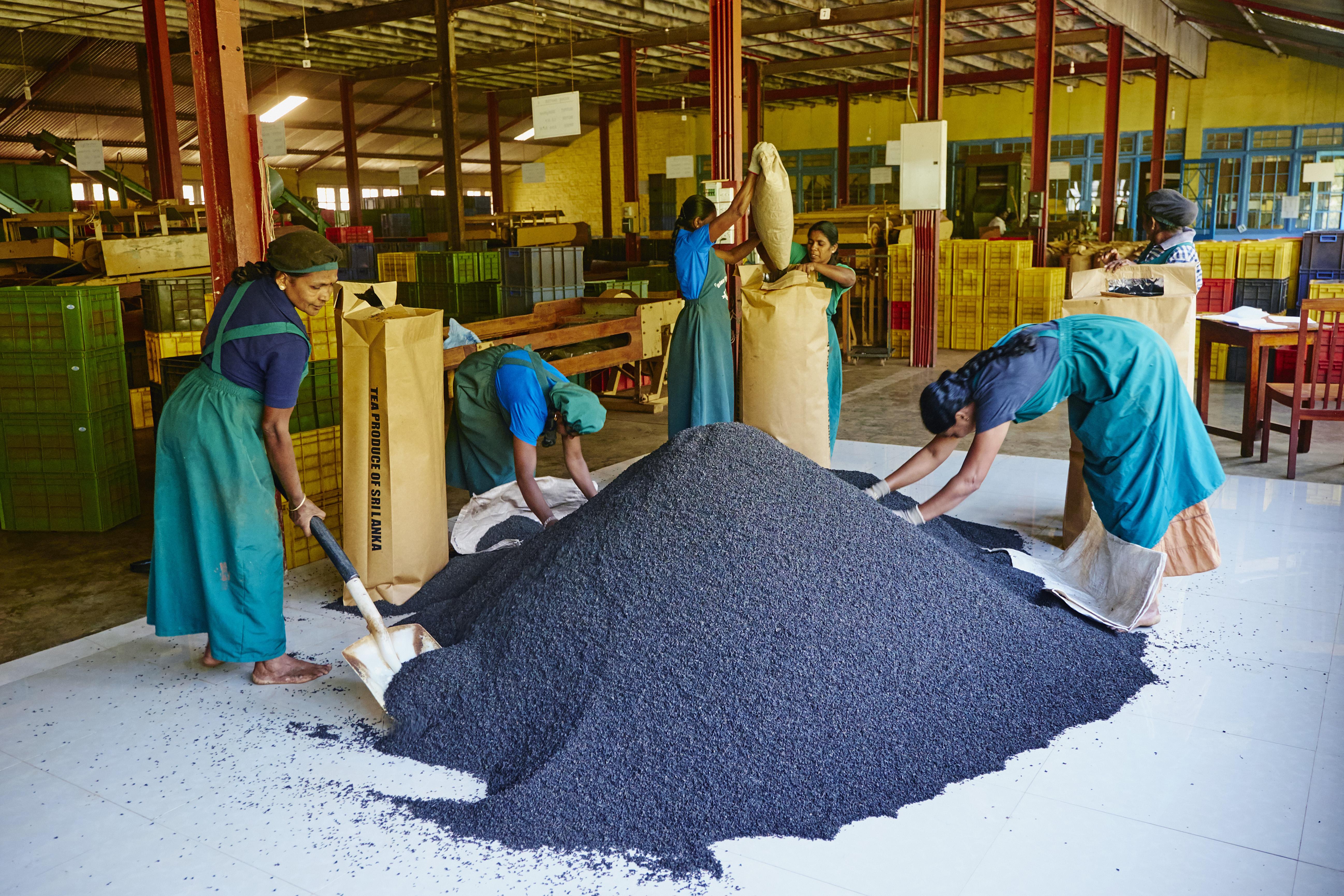 Sri Lanka, Nuwara Eliya, tea factory