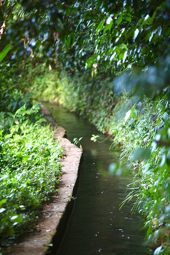 IMG_5097_canal des esclaves