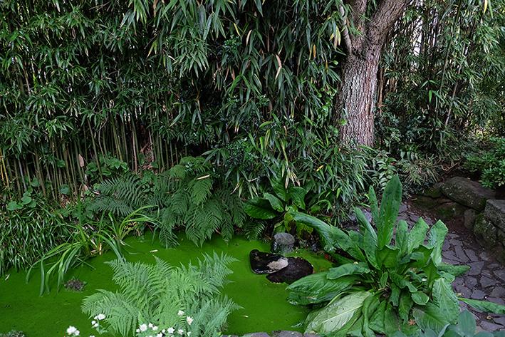 jardin interieur 3 © ep