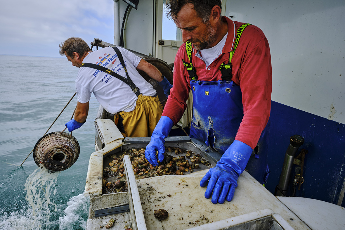 France, Normandy, Manche department, Granville, whelk fishing