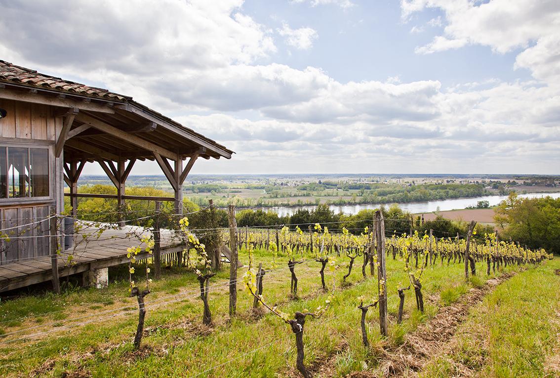 Cabane-dans-les-Vignes-IMG_7830B