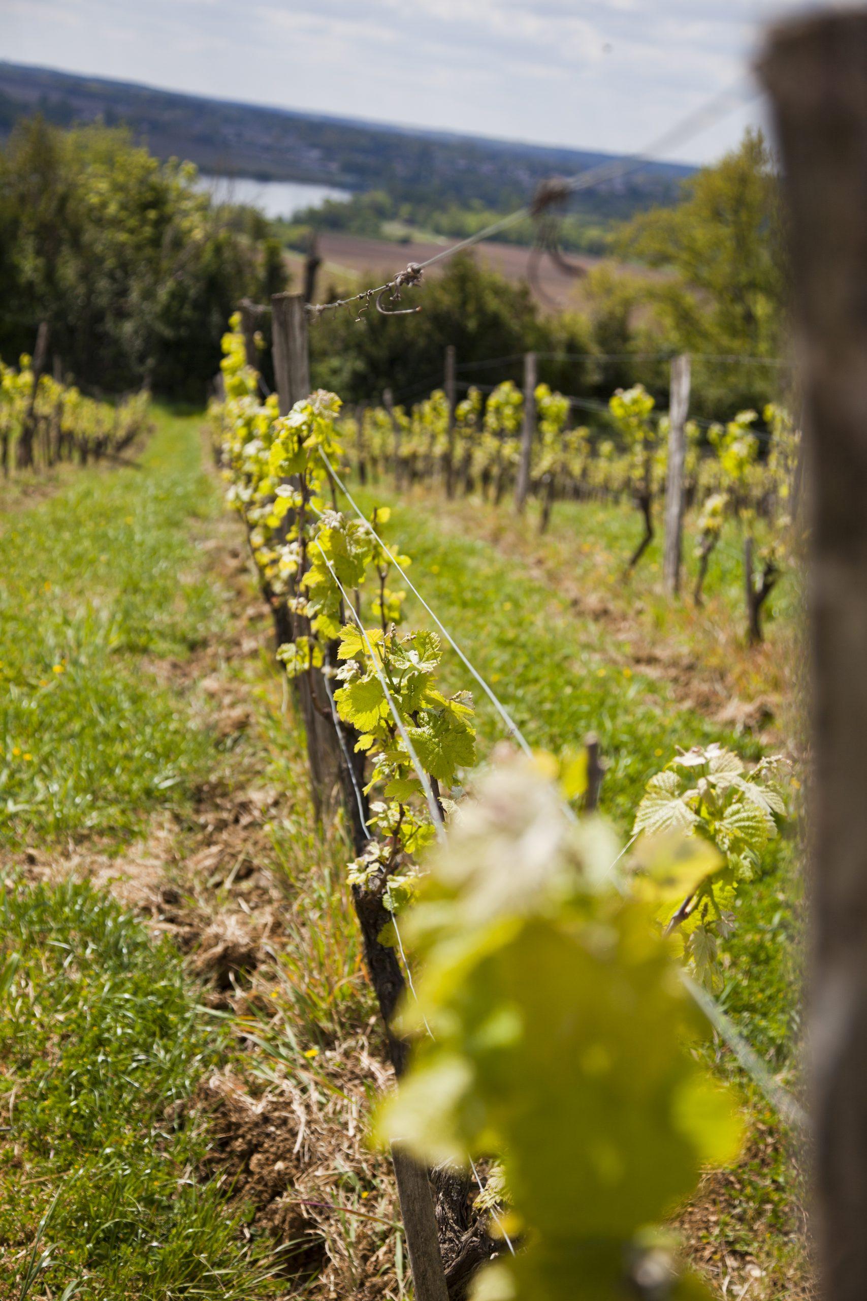 Cabane-dans-les-Vignes-IMG_7848