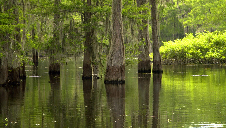 Lafayette, Louisiana Authentic Cajun Destination: Live Entertainment, Culture and Swamp Tours.