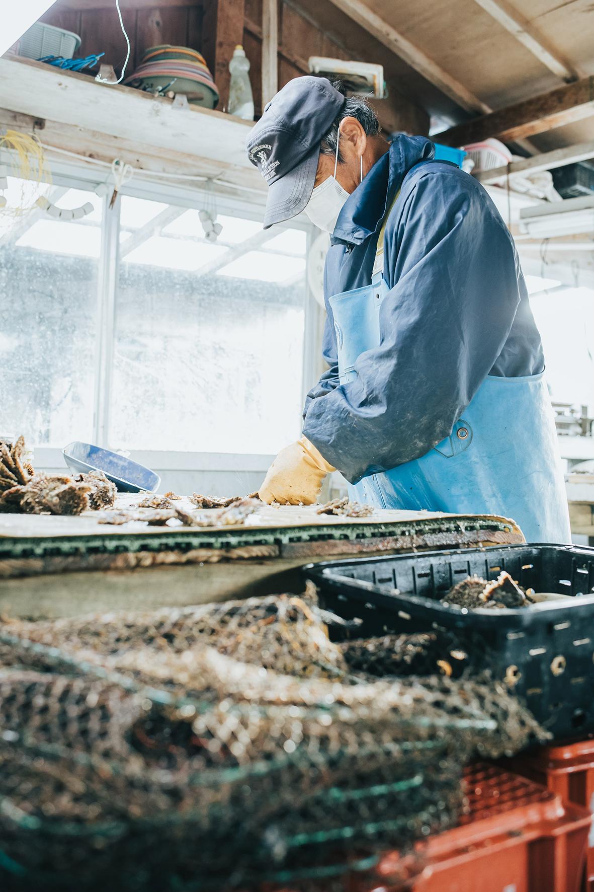 Producteur huîtres perlières 2, Mie