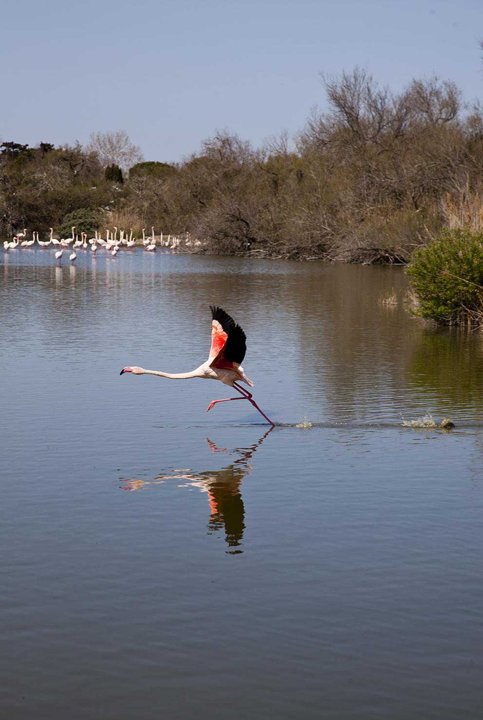 Camargue-Parc-Ornithologique-du-Pont-de-Gau-IMG_7509