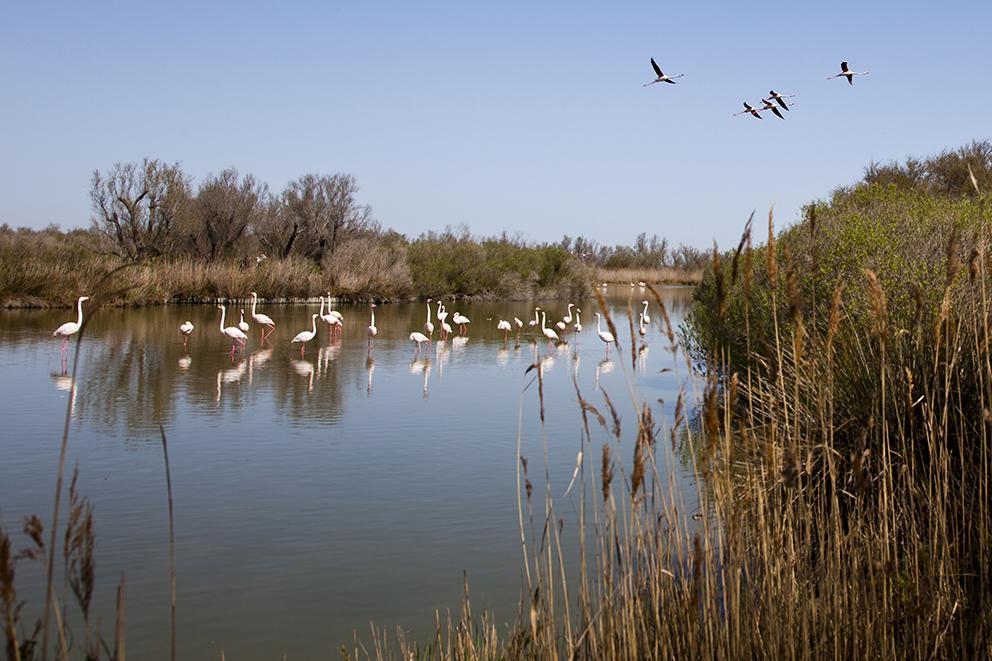 Camargue-Parc-Ornithologique-du-Pont-de-Gau-IMG_7513