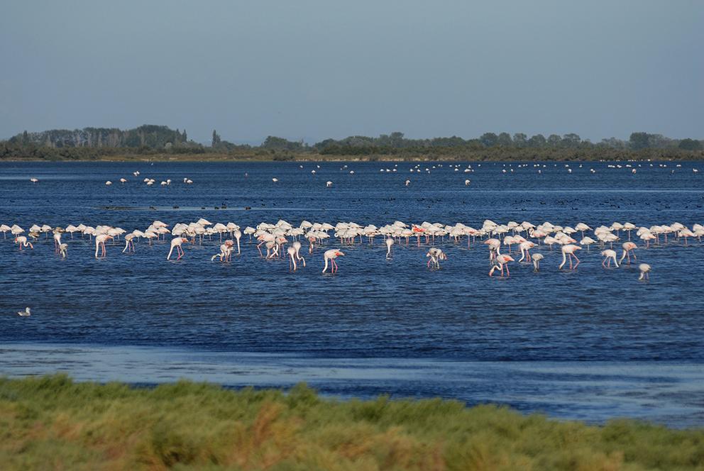 Parc ornithologique 01451